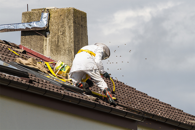 Bee Pest Control in Solihull West Midlands